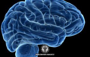 ویتامین های مورد نیاز برای تقویت مغز